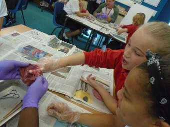 heart dissection year 6 8 340